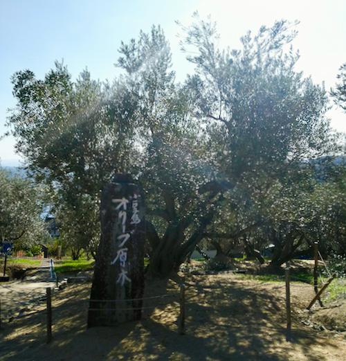olivepark3