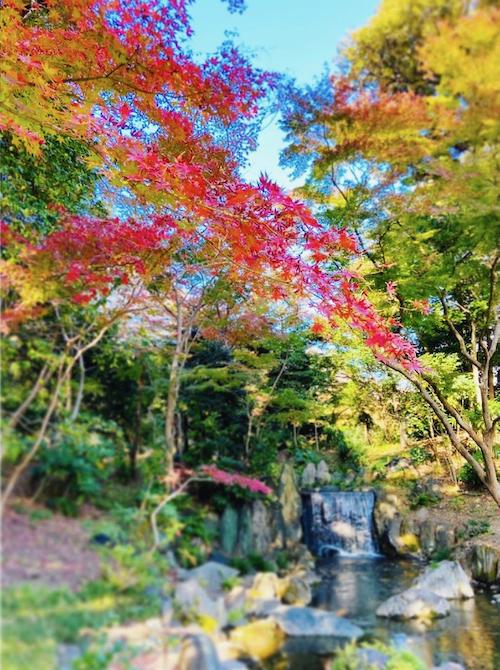 koishikawakorakuen1